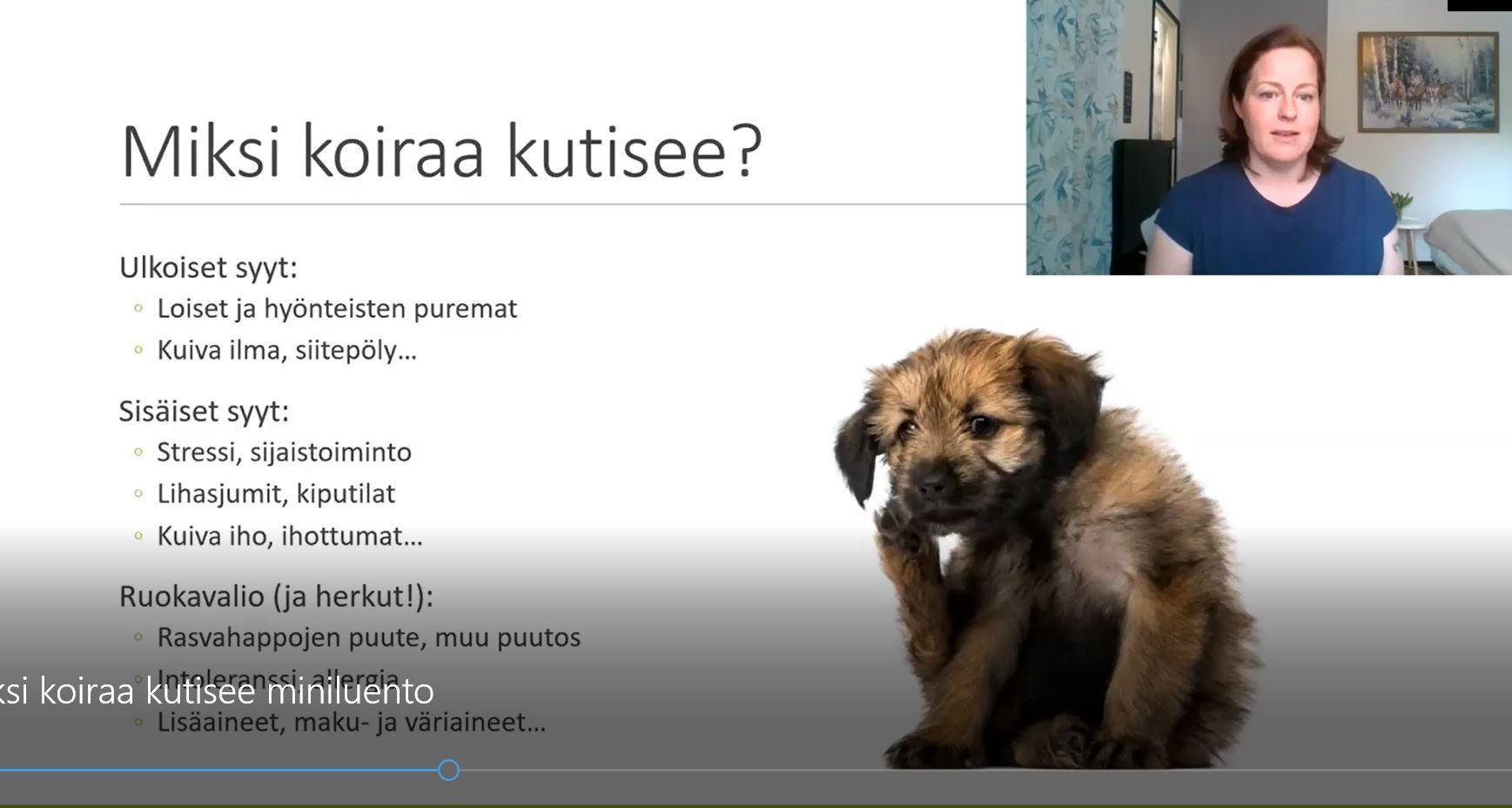miksi koiraa kutisee? 5 tavallisinta syytä koiran kutinaan