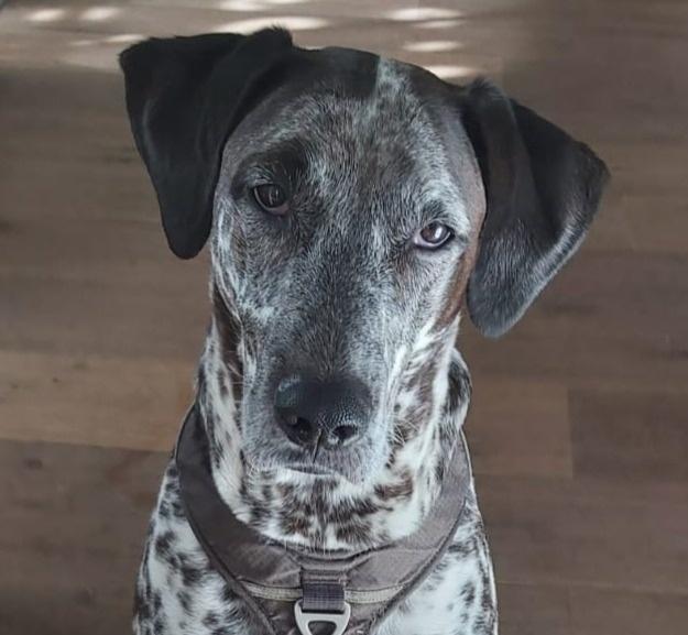 Gedragstherapie hond