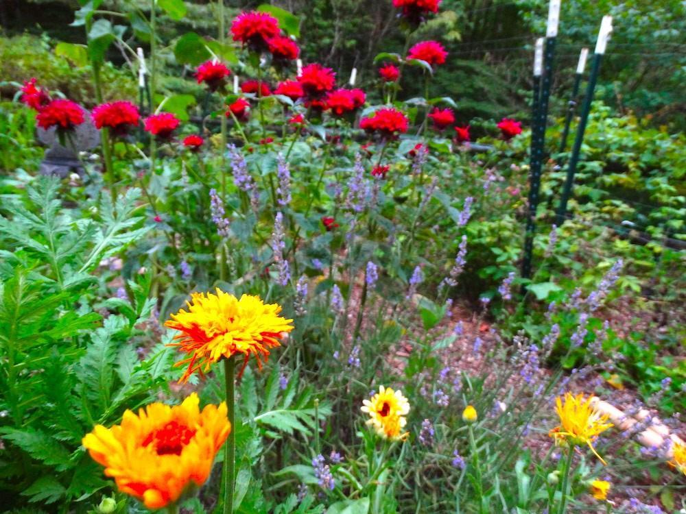 Medicinal herb garden the wise woman way