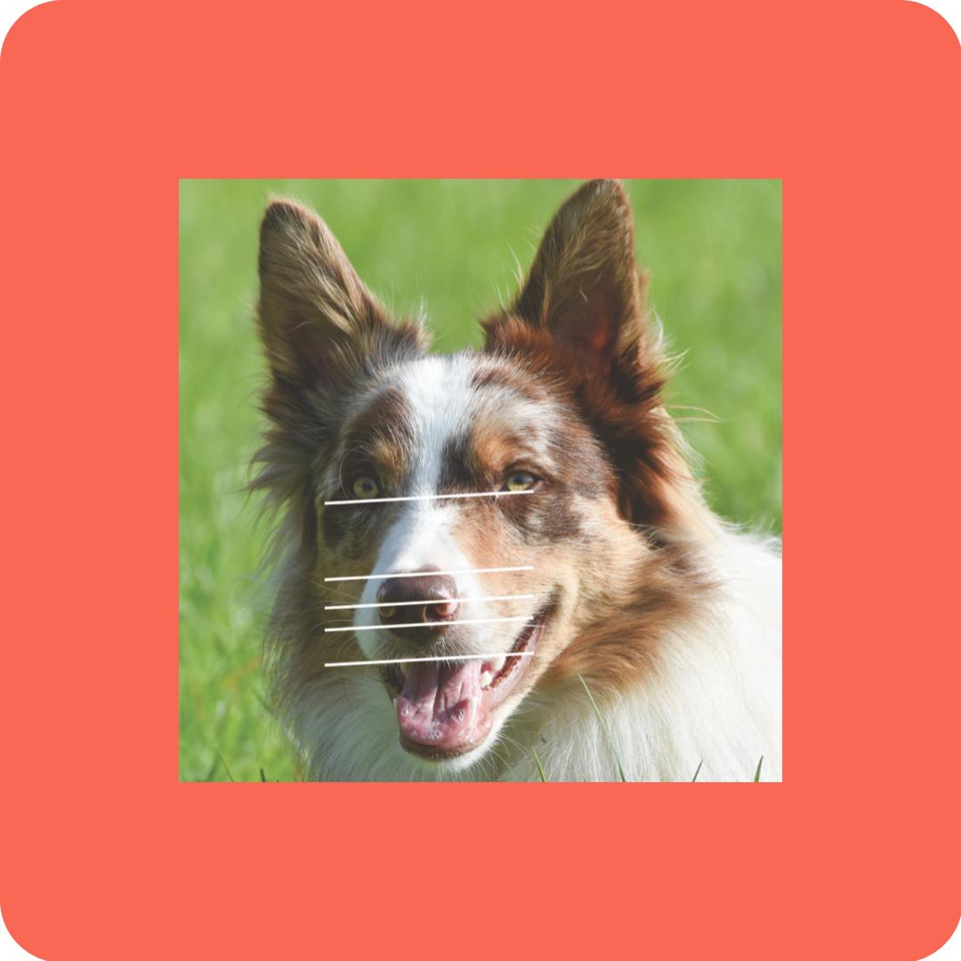 Drawing Dogs - Patreon - Free Resources - Bonny Snowdon Fine Art