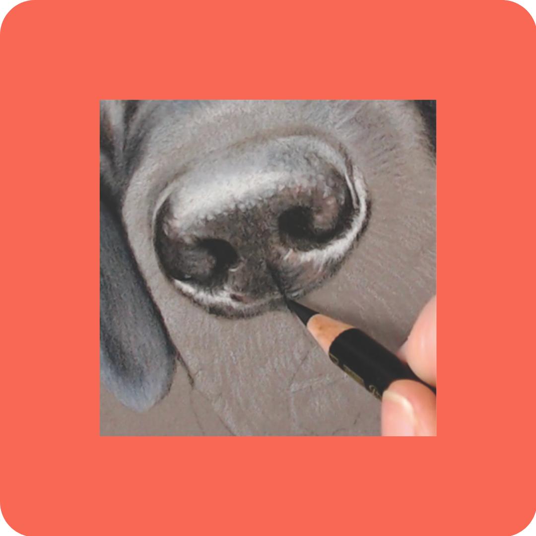 Dog Noses - Patreon - Free Resources - Bonny Snowdon Fine Art