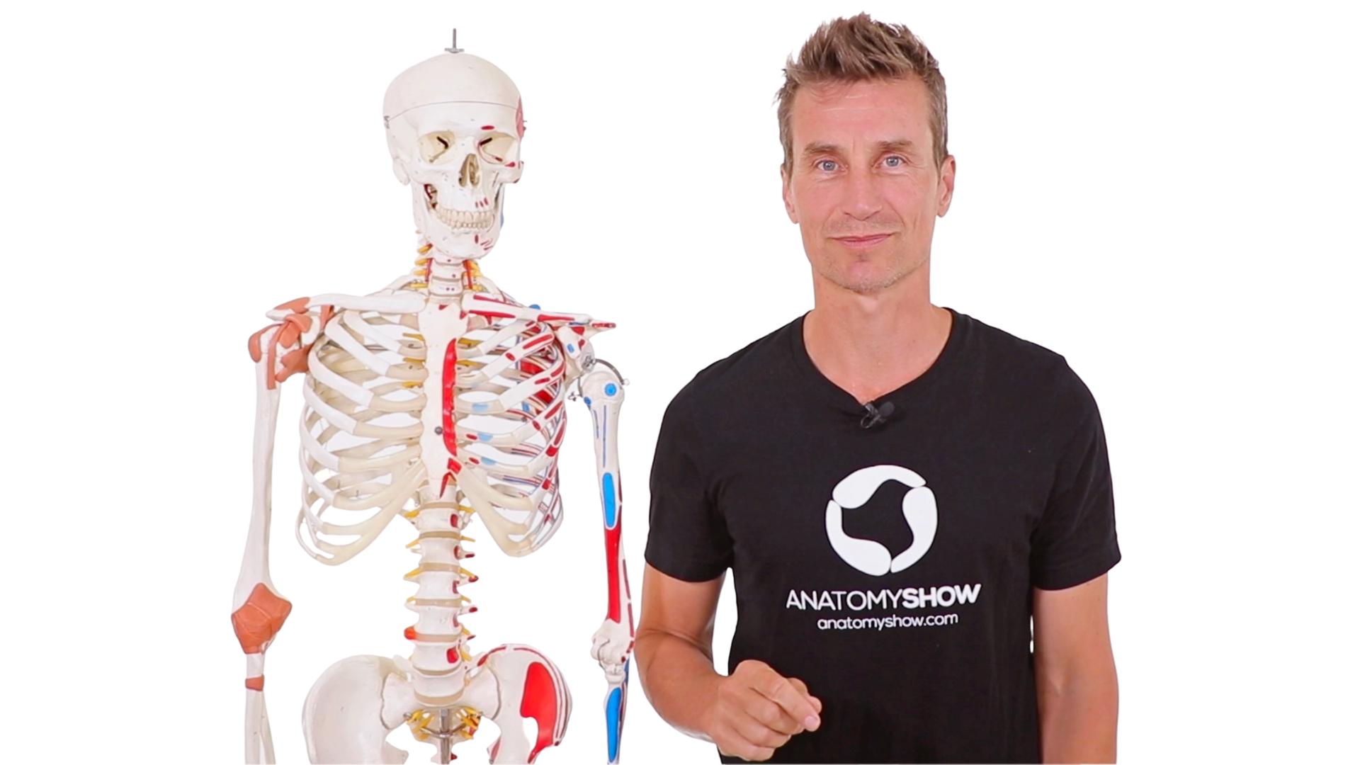yoga anatomy teacher