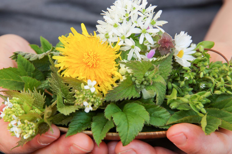 Ayurveda Herbalist Training