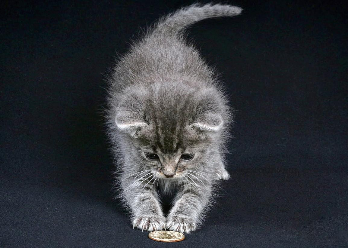 Kitten with Quarter