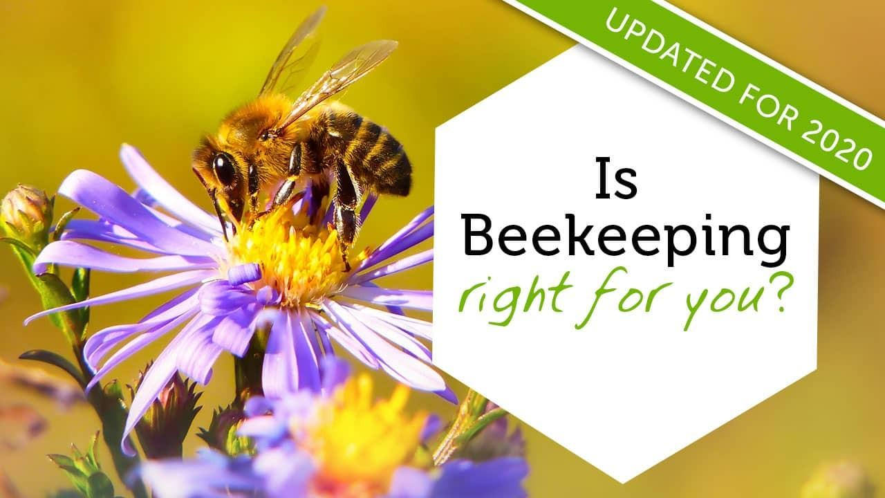 introduction to beekeeping online course