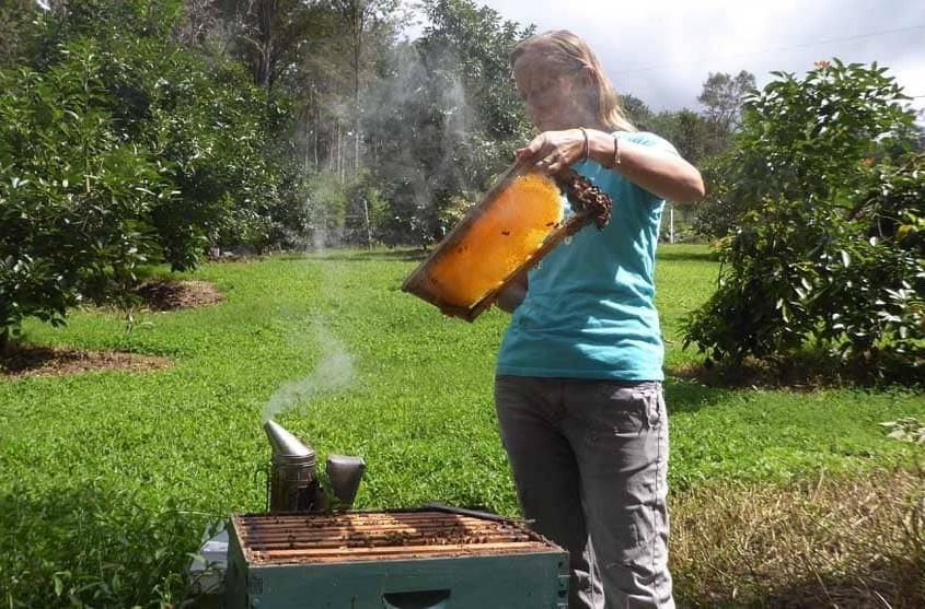 beekeeper no veil in Hawaii