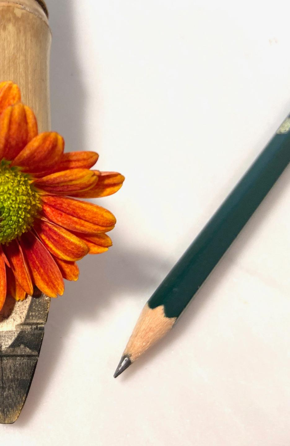 drawing pencil and bamboo ink pen with orange zinnia