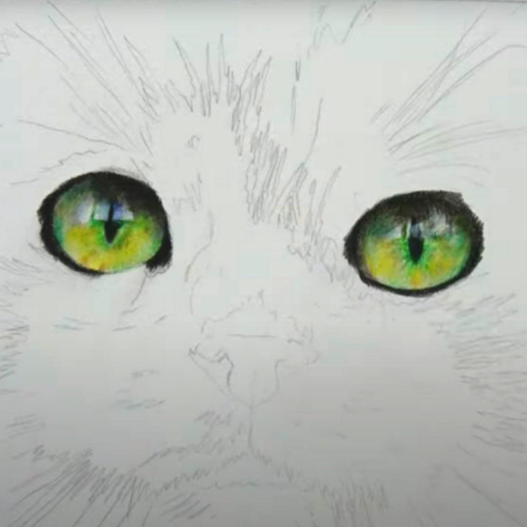 Green Cat Eyes - Focus Video - Patreon - Bonny Snowdon Fine Art