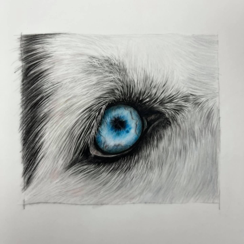 Husky Eye - Tier One - Patreon - Bonny Snowdon Fine Art