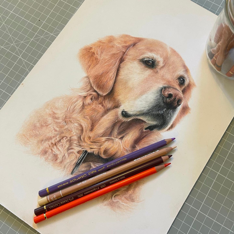 Dachshund - Tier One - Patreon - Bonny Snowdon Fine Art