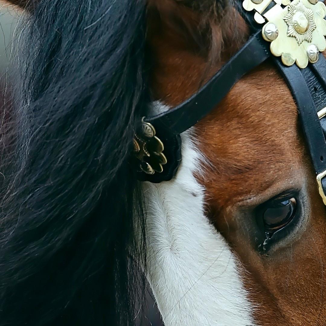 Perseus Drum Horse - Brow Band - Patreon - Bonny Snowdon Fine Art