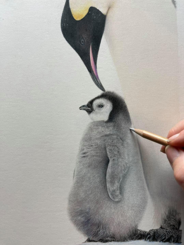 Penguins - Patreon - Bonny Snowdon Fine Art