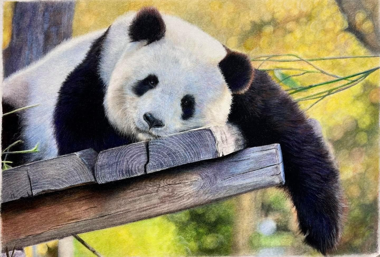 Panda - Tier Two - Patreon - Bonny Snowdon Fine Art