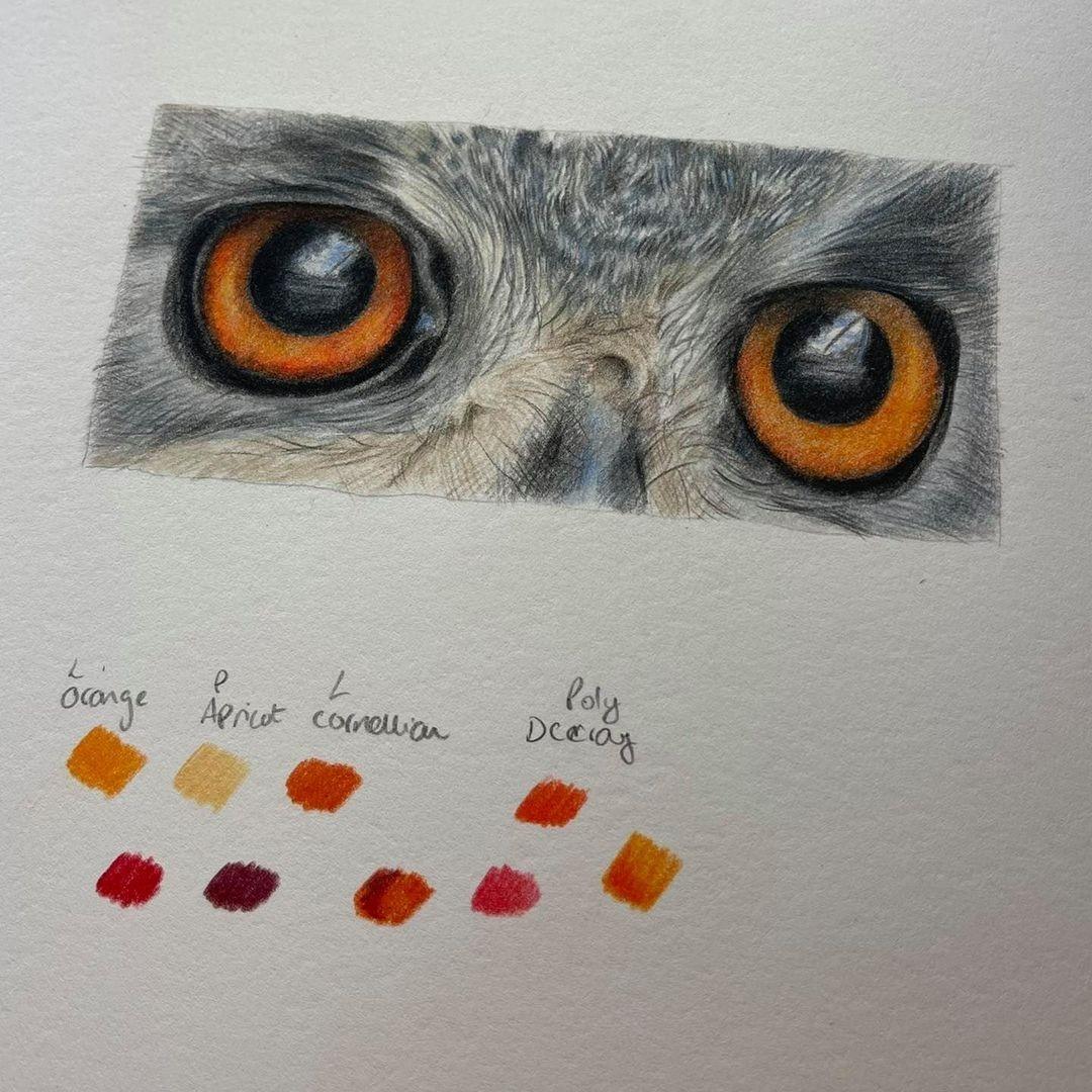 Eagle Owl Eyes - Patreon - Bonny Snowdon Fine Art