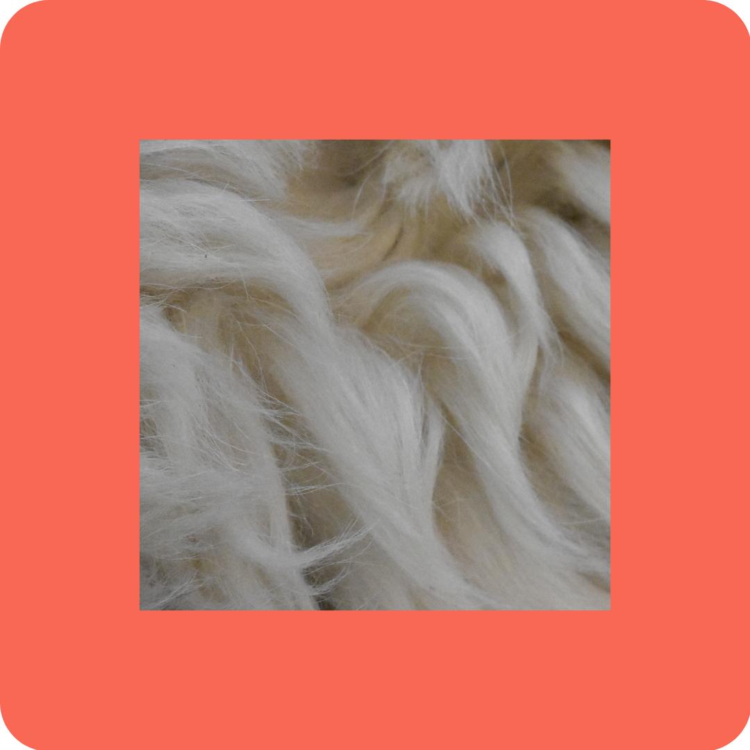 White Fur - Tutorials to Get You Started - Patreon - Bonny Snowdon Fine Art