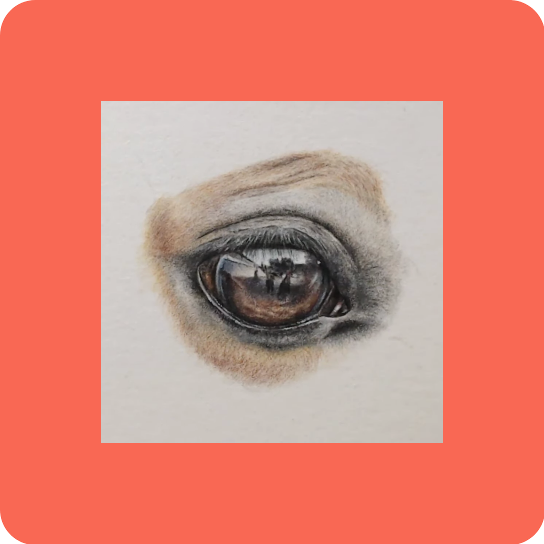Horse Eye - Tutorials to Get You Started - Patreon - Bonny Snowdon Fine Art