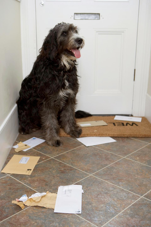 shaggy dog at door mail slot