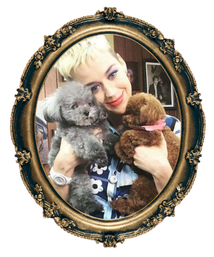 Katy Perry and her dogs, teacup Poodles Nugget and Mighty