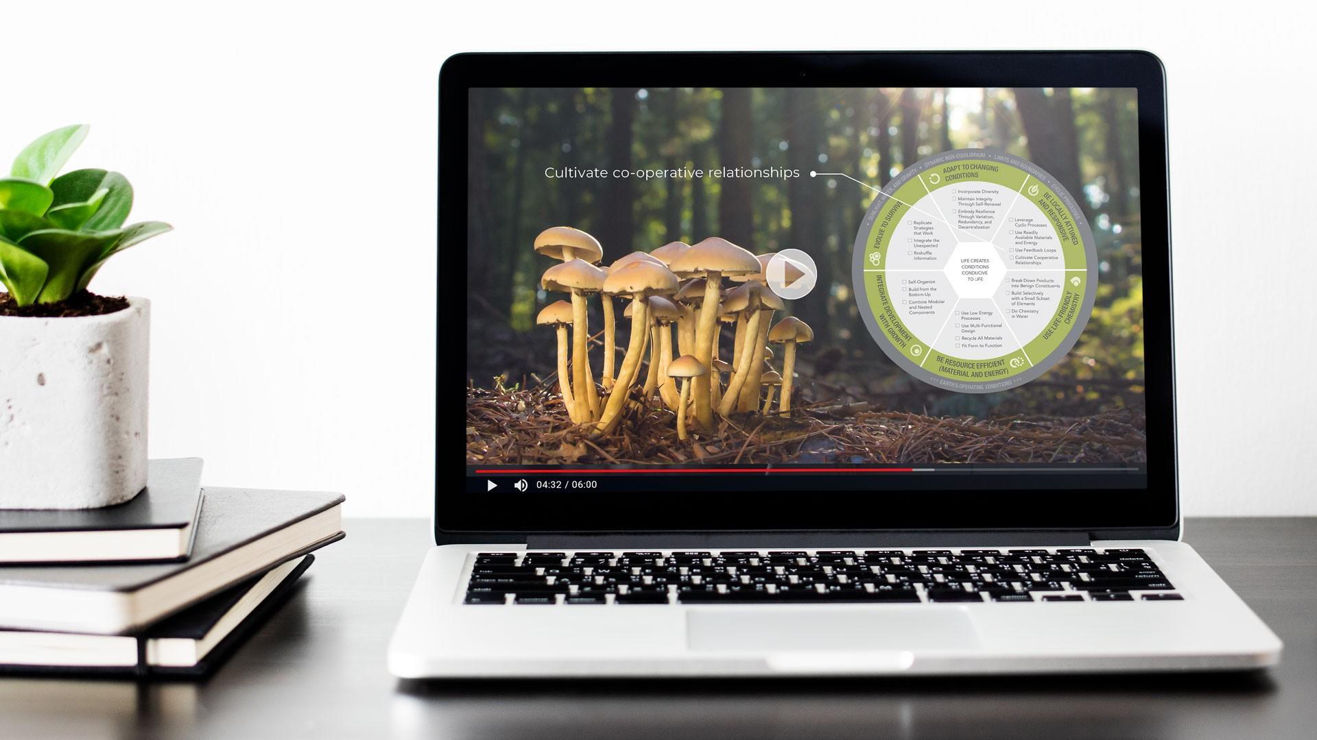 biomimicry lifes principles course