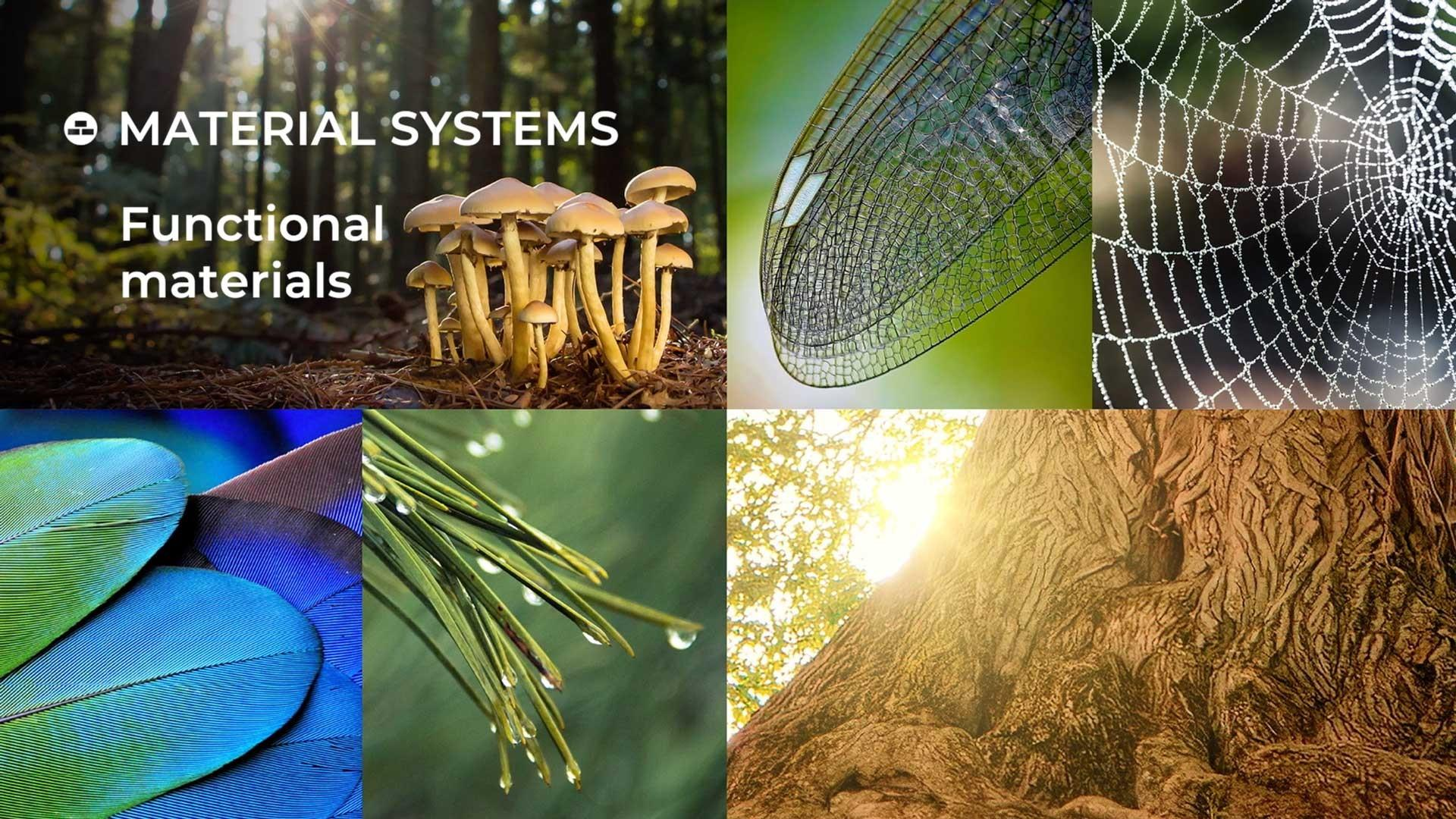 biomimicry examples found in nature