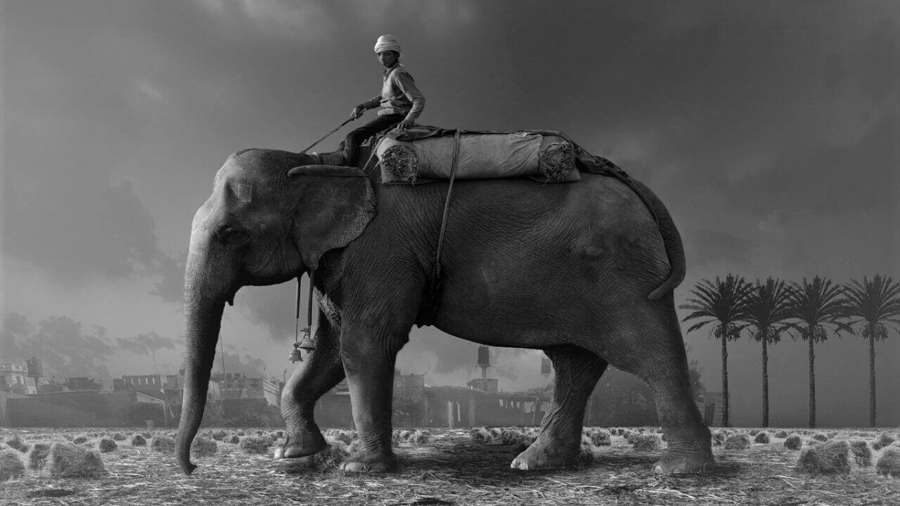 How to Ride an Elephant - PeopleAtRightPlace