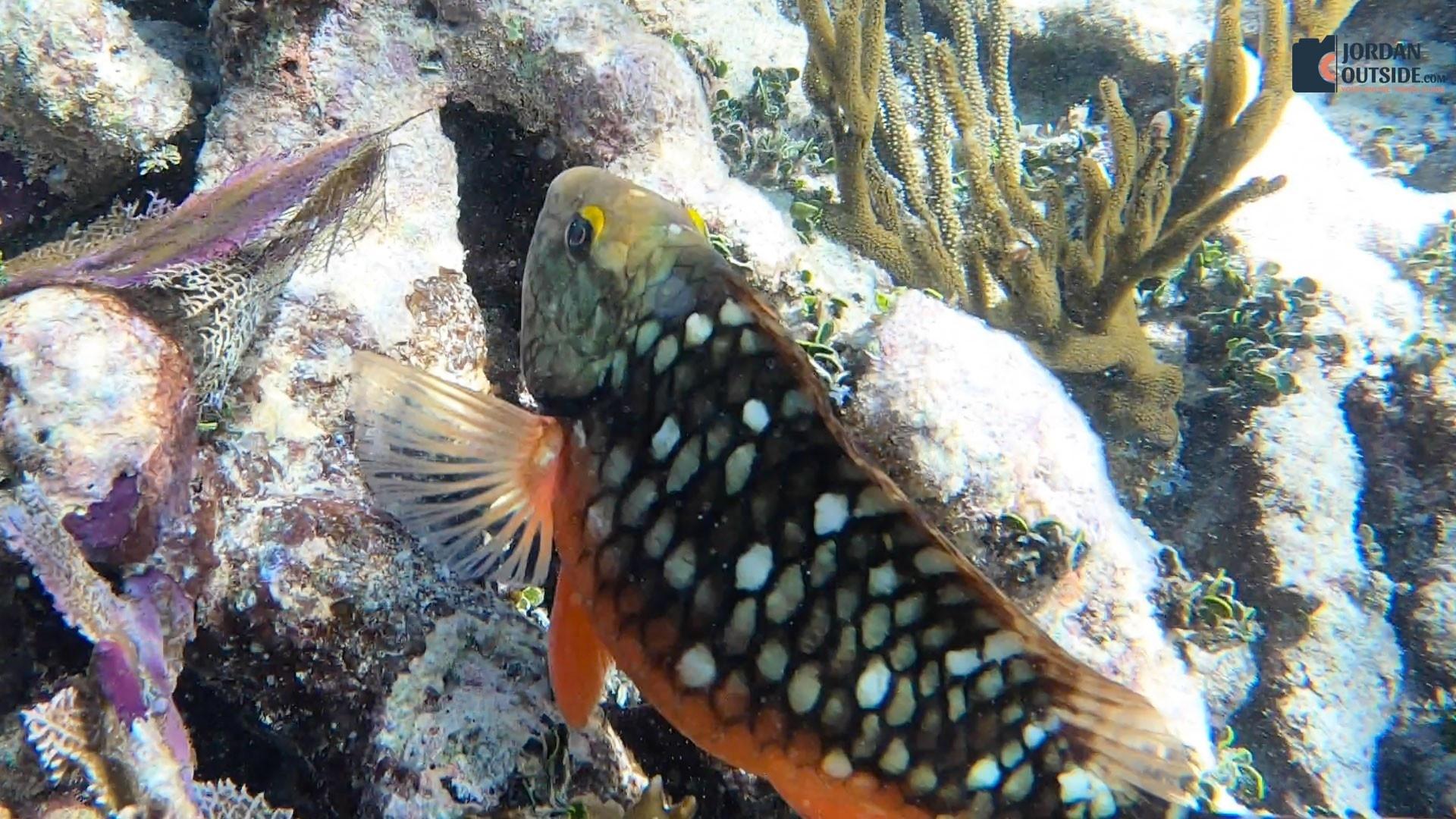 Orange Fish at the Grecian Rocks Coral Reef