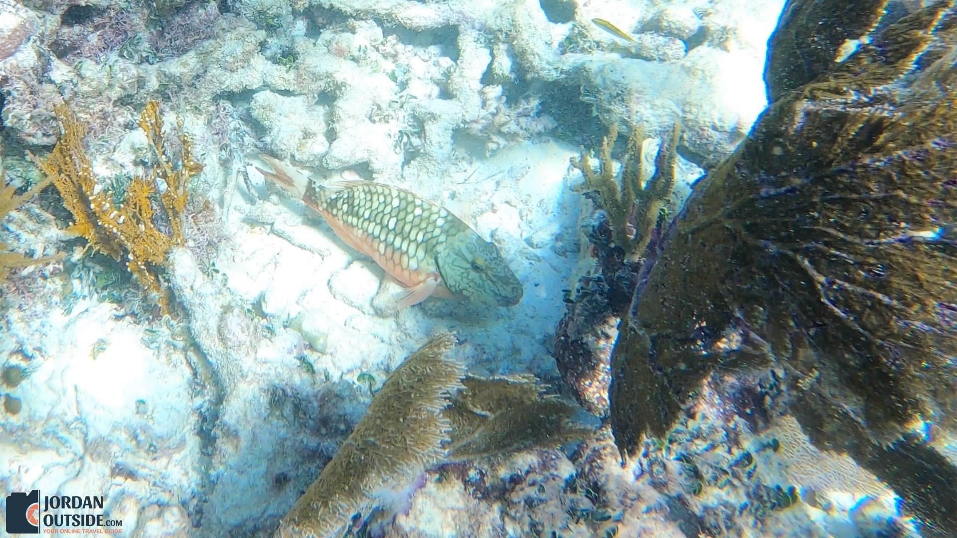 Fish at the Grecian Rocks Coral Reef