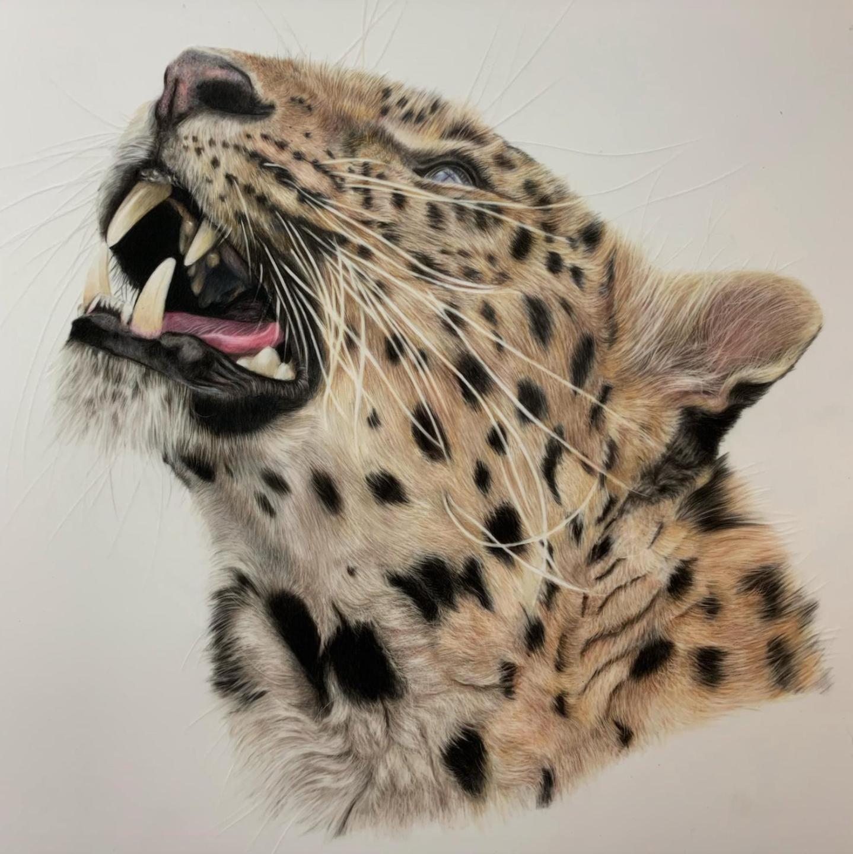 Amur Leopard - Patreon - Tutorial Gallery - Bonny Snowdon Fine Art