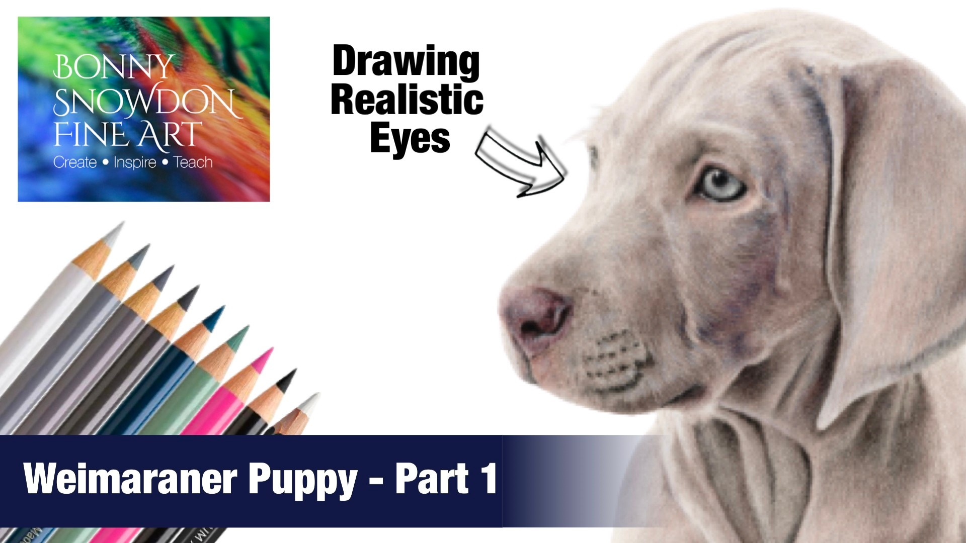 Drawing a Weimaraner in Coloured Pencils - YouTube - Bonny Snowdon Fine Art