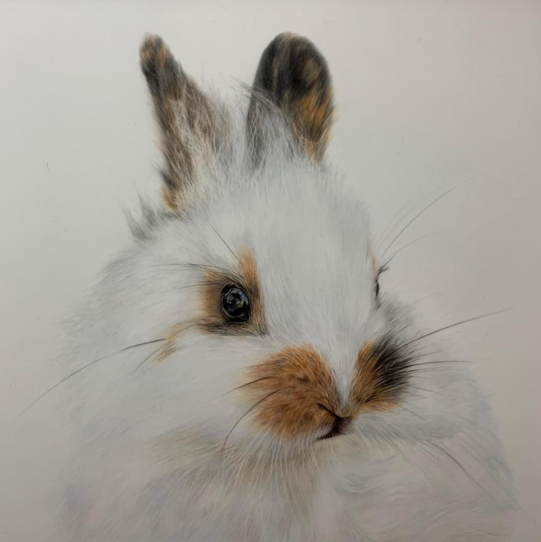 Fluffy Bunny - Patreon - Tutorial Gallery - Bonny Snowdon Fine Art