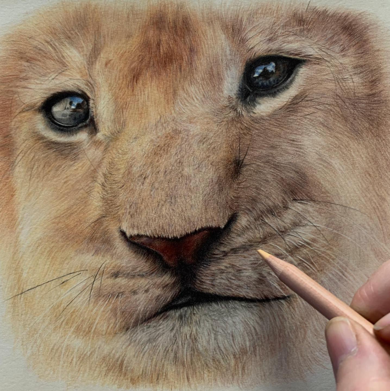 Lion Cub - Patreon - Tutorial Gallery - Bonny Snowdon Fine Art