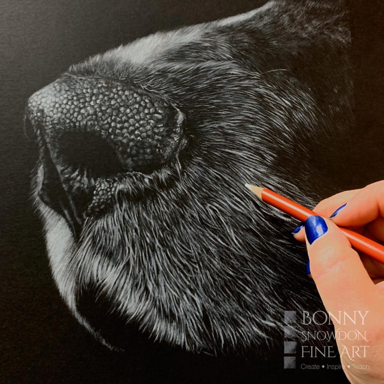 Dog Nose - Patreon - Tutorial Gallery - Bonny Snowdon Fine Art