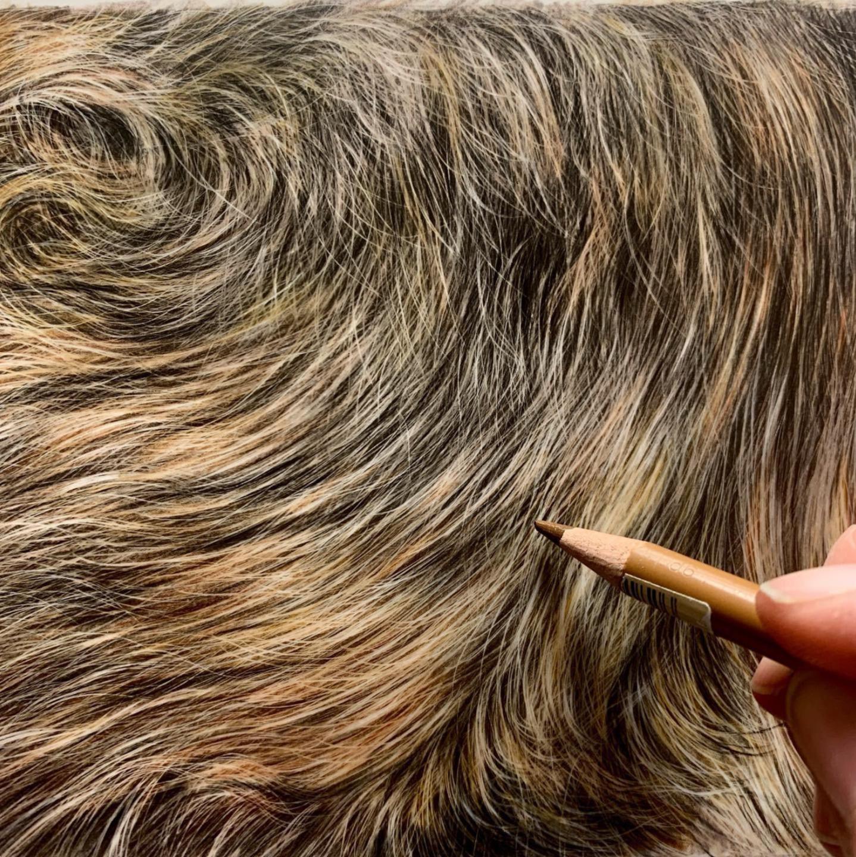 German Shepard Fur - Patreon - Tutorial Gallery - Bonny Snowdon Fine Art
