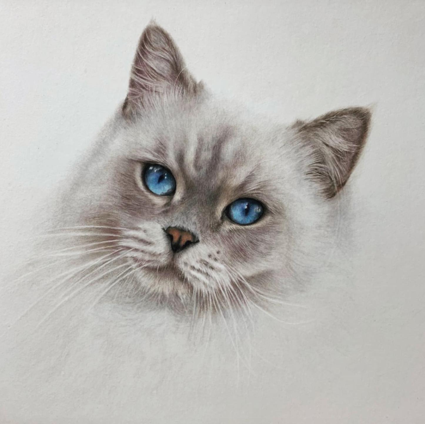 Fluffy Cat Focus - Patreon - Tutorial Gallery - Bonny Snowdon Fine Art