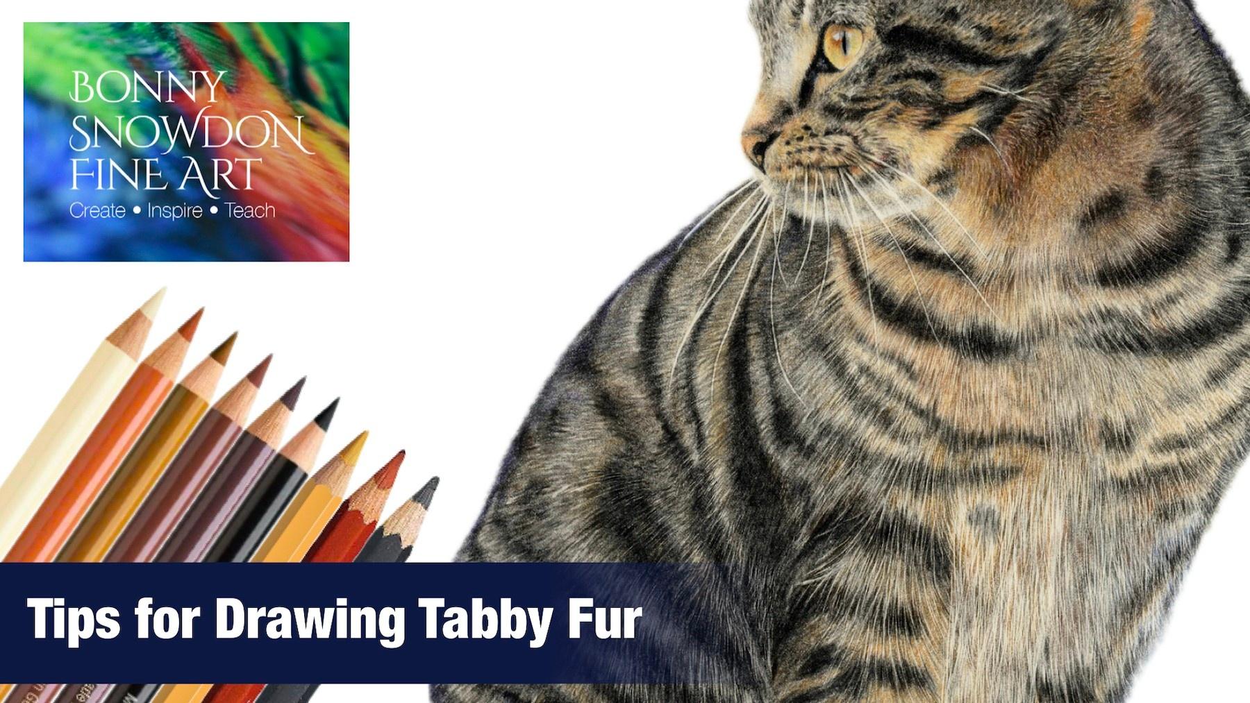 Tips for Drawing Tabby Fur - YouTube - Bonny Snowdon Fine Art