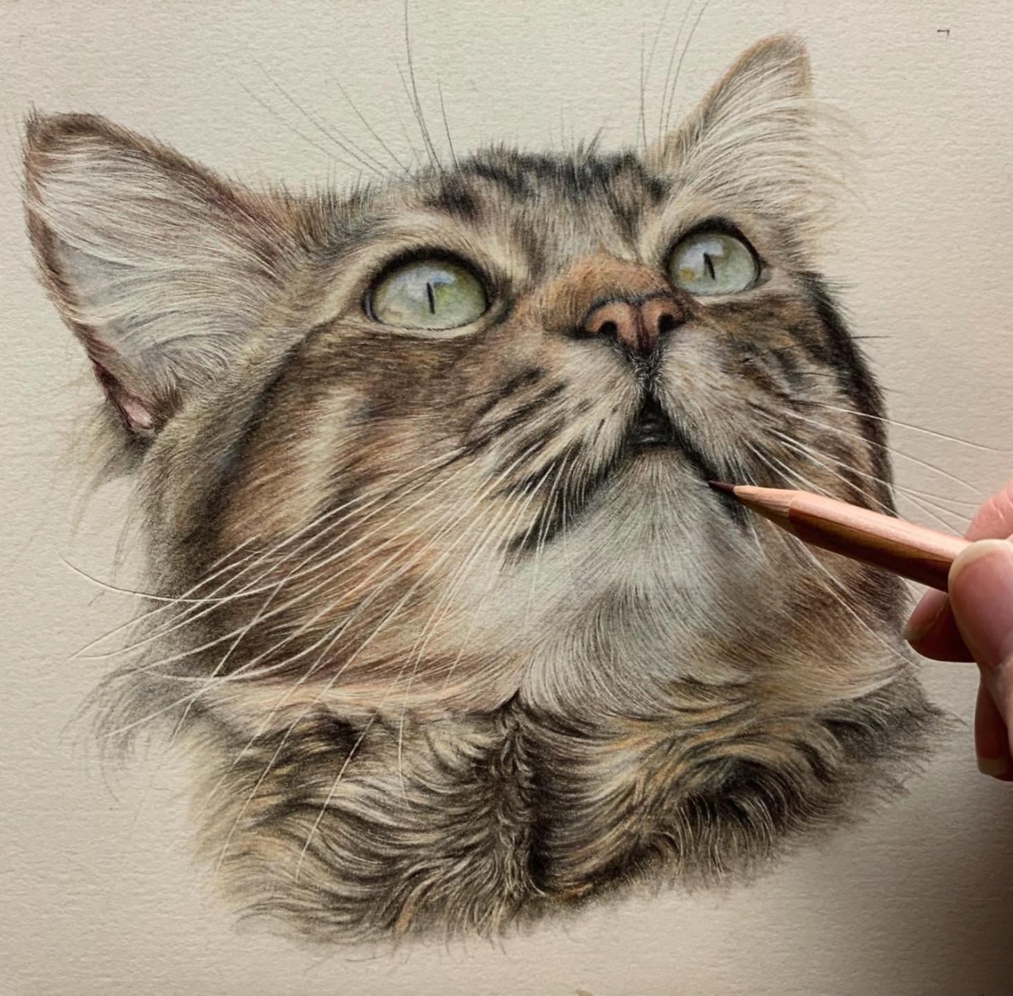 Cat Face - Patreon - Tutorial Gallery - Bonny Snowdon Fine Art