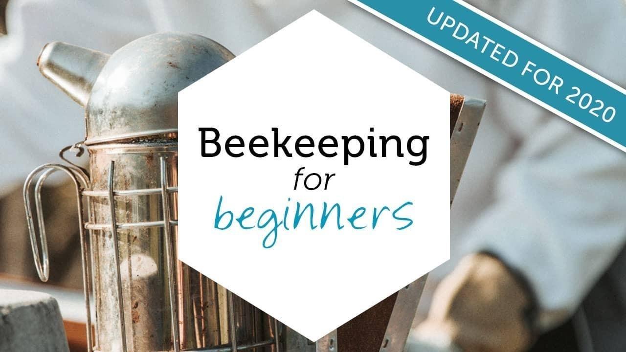 beekeeping for beginner online class image