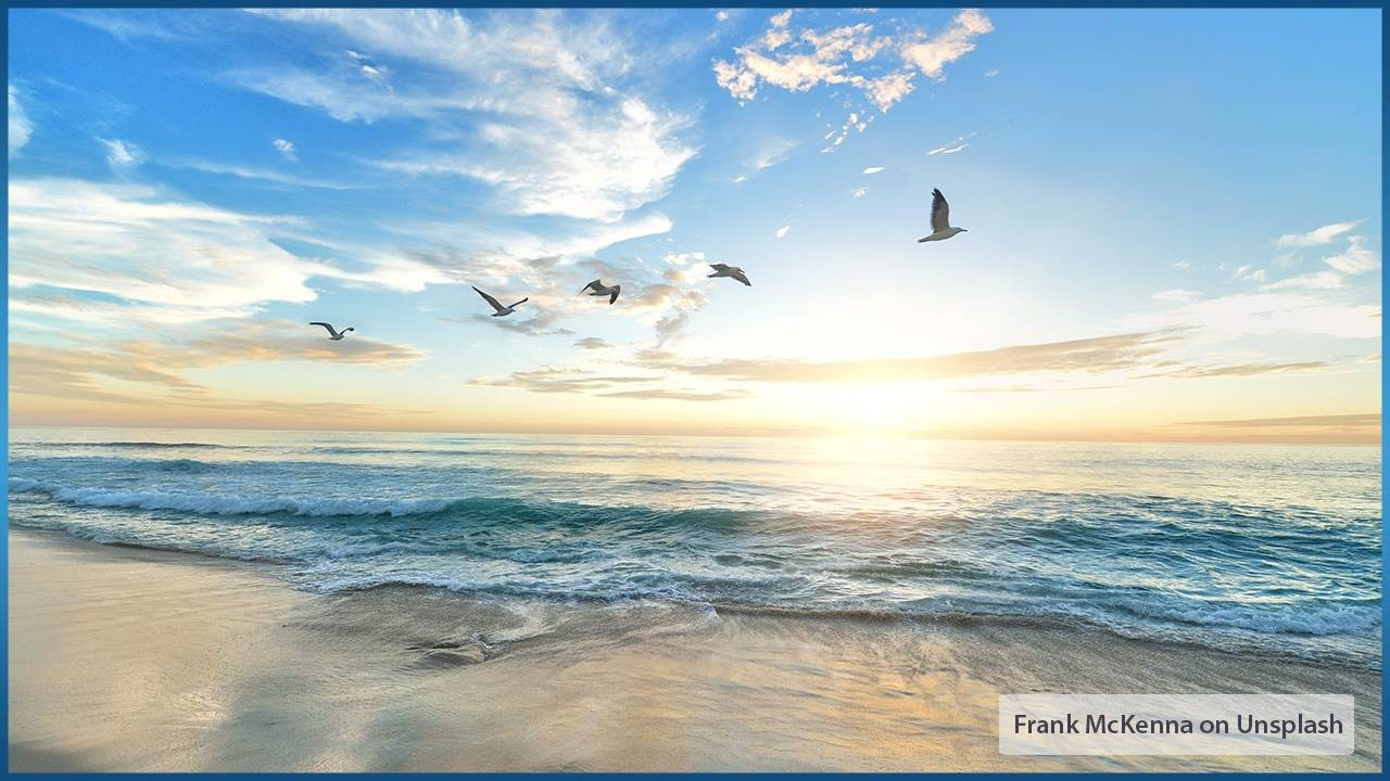 flock of birds flying over sunny beach