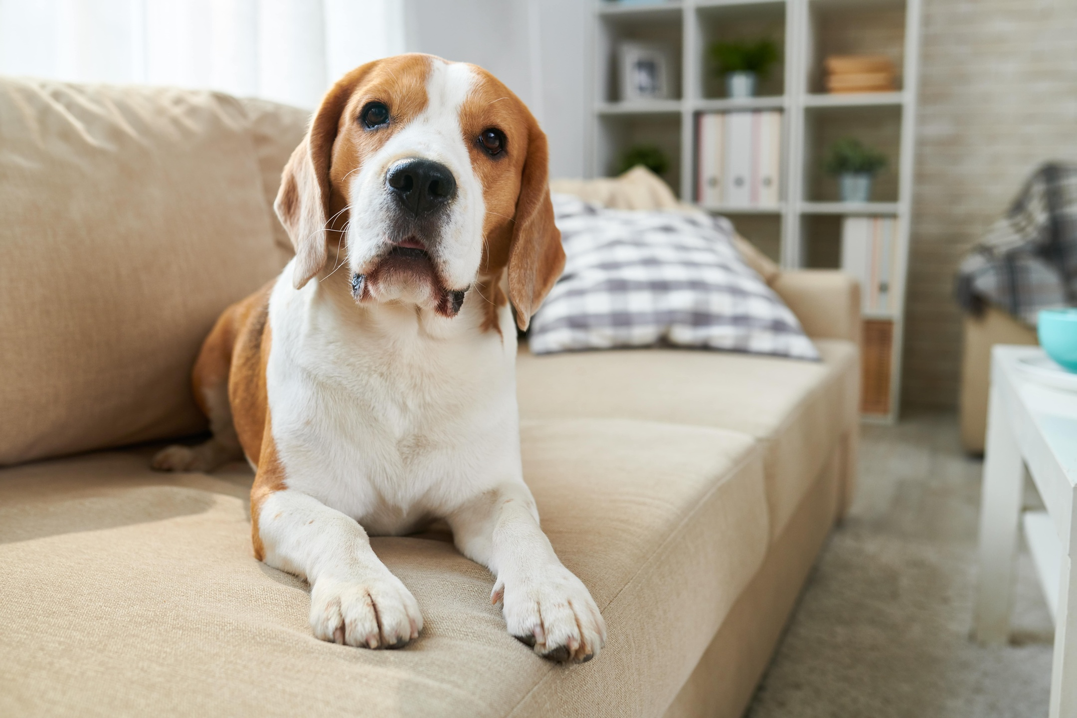 Dog Training and Dog-friendly Outdoor Activities in Fort Worth, Texas