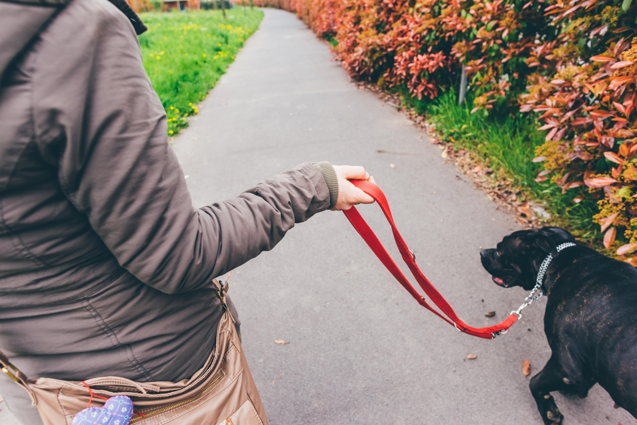 Woman walking dog, Dog Training and Dog-Friendly Outdoor Activities in Frisco, Texas