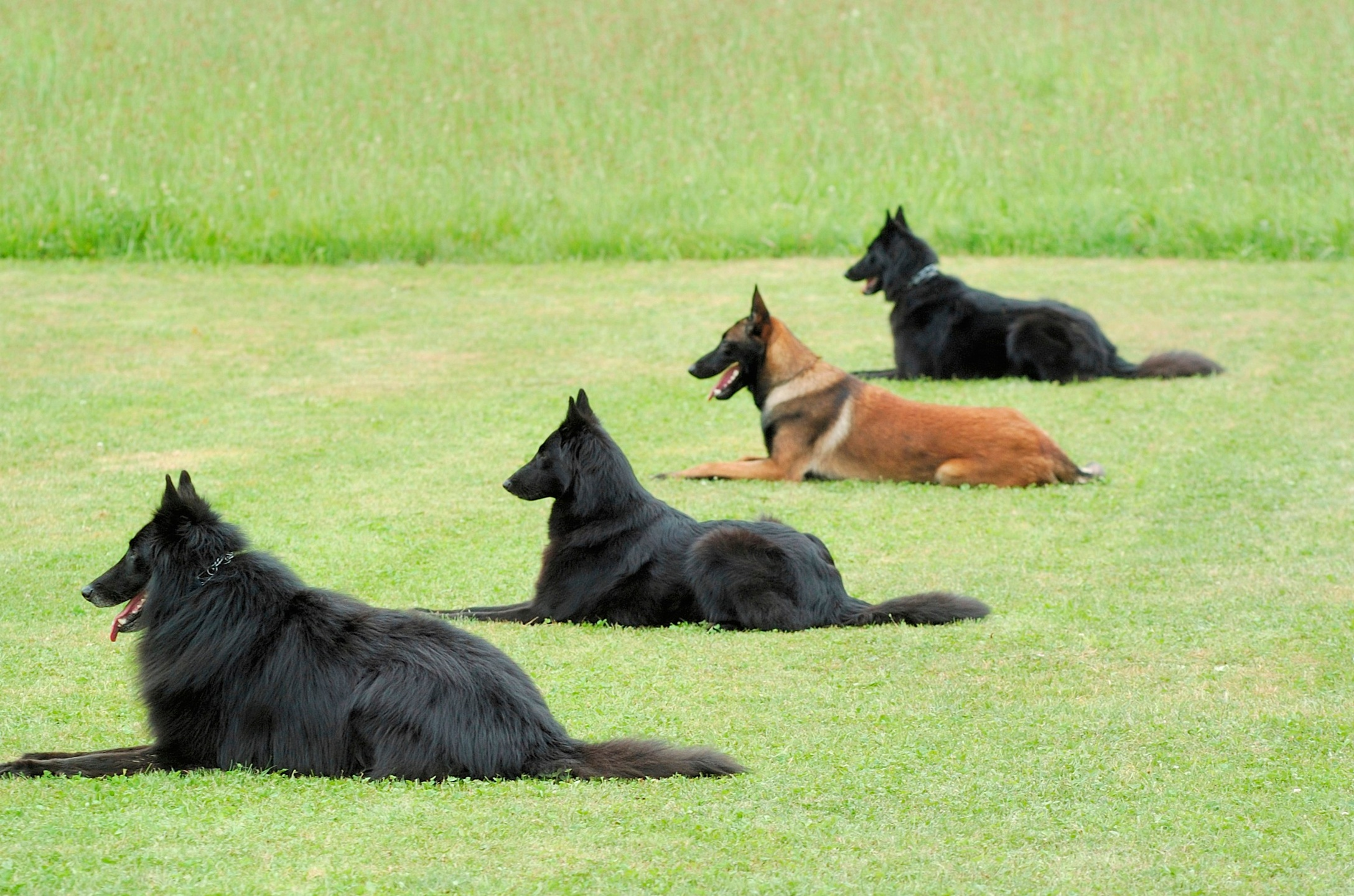 4 different breed dogs during Dog Training and Dog-Friendly Outdoor Activities in The Colony
