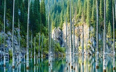 Forest of Kazakhstan