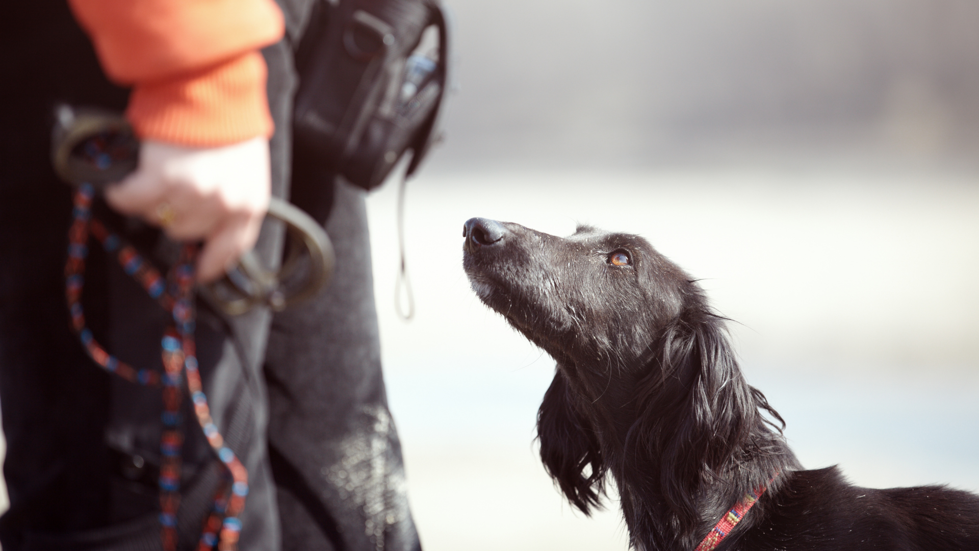 Metropawlitan Dog Training Assessment