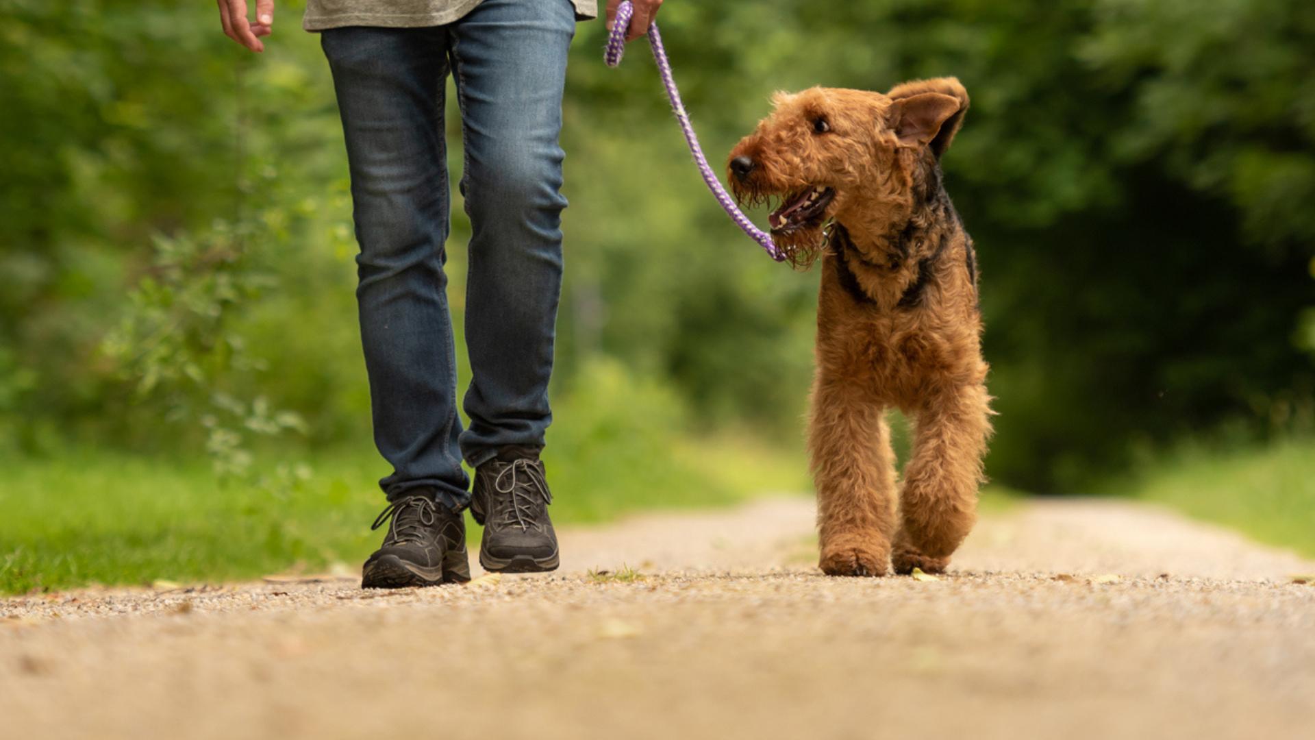 Metropawlitan Dog Training Loose Leash Walking