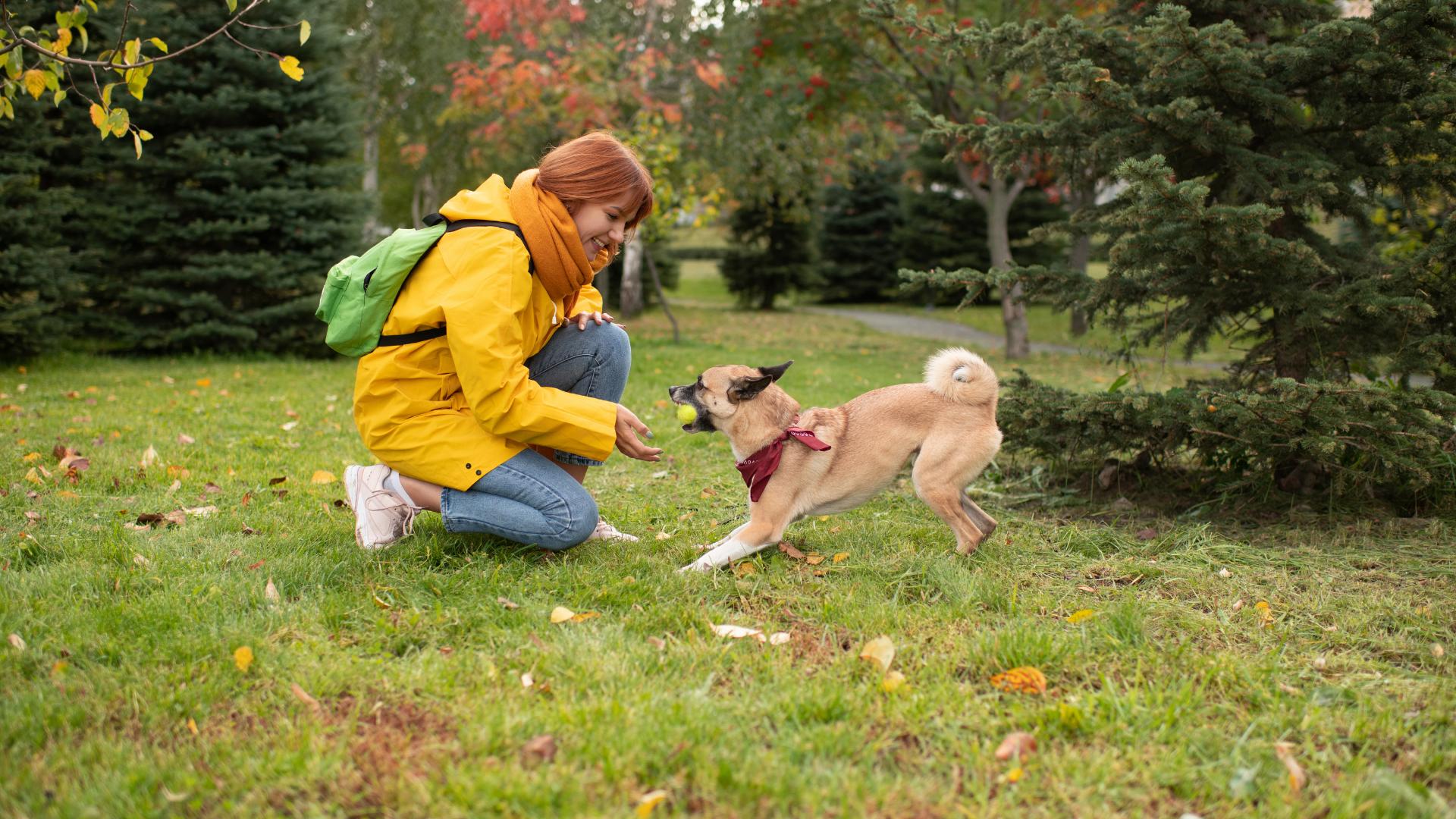 Metropawlitan Dog Training Inc. - Play